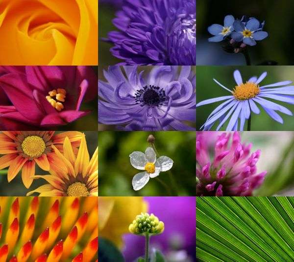 Click to view Macro Flowers I screenshots
