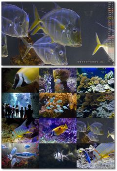 Aquarium at Oceanographic Museum of Monaco