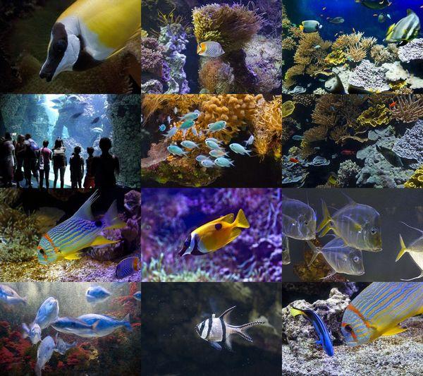 Aquarium at Oceanographic Museum of Monaco ePix Calendar