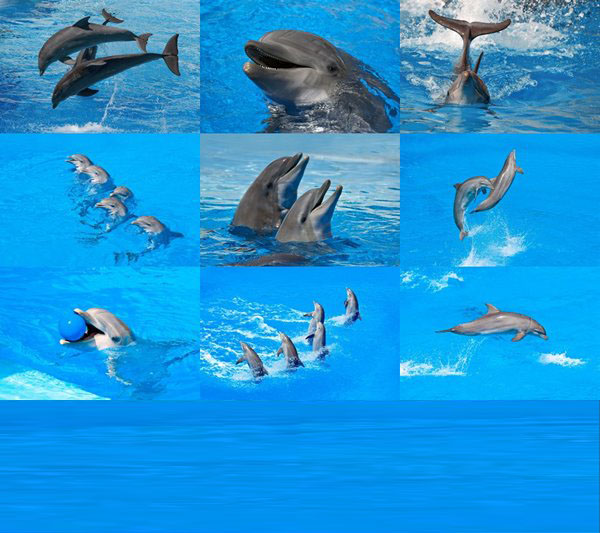 Dolphins by Dean Bertonelj